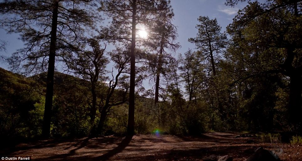 Calm: This forest shot has a relaxing quality