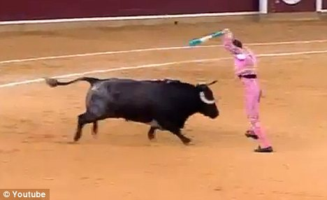 Before: Padilla moves to place the banderillas into the bull