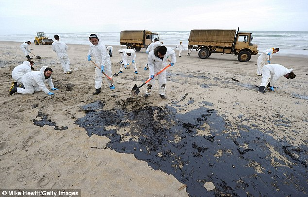 Clean up: Soldiers worked to clear away the oil spill from the beach in Taurange, New Zealand, as environmentalists warned of a potential wildlife disaster