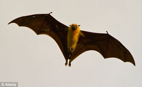 Flying high: If claims there are bats roosting in the roof of caravans are true, parts of Dale Farm could remain intact