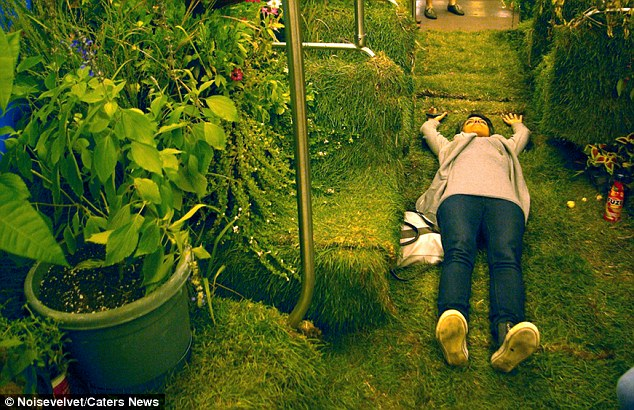 Time to relax? A commuter takes a break by lying down on the green grass in the train carriage