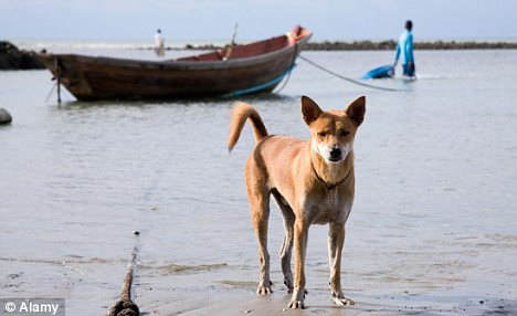 Refugee: A dog has become the first canine to flee from North Korea to the South, after it was brought aboard a small boat by its fleeing owner