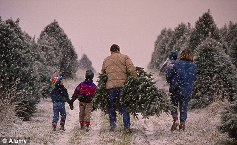A 15-cent tax will be imposed on the sales of fresh Christmas trees by sellers of more than 500 trees per year (file picture)