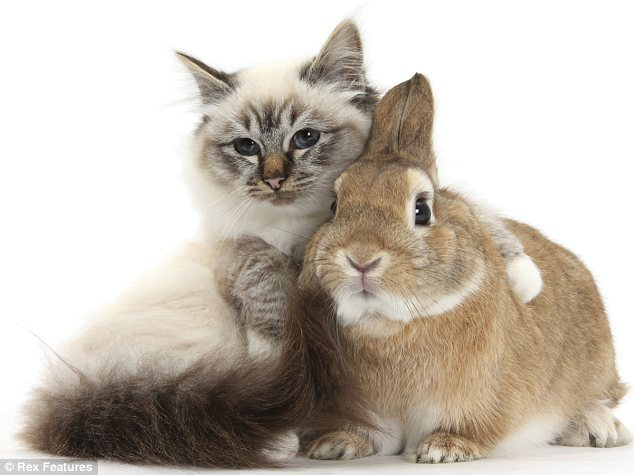 Cosy: Peter the rabbit snuggles up happily to his feline friend in this amazing Mark Taylor photo