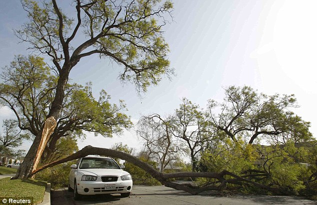 Stuck: A car is pictured under a tree branch that had broken off following a wind storm in Pasadena