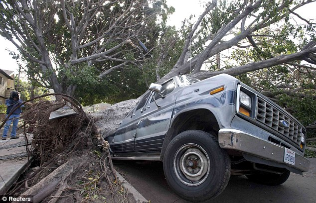 Crushed: The van sits crushed under a fallen tree in the Highland Park neighborhood of Los Angeles
