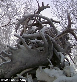 Icy: Antler's sold by Sarah's dad