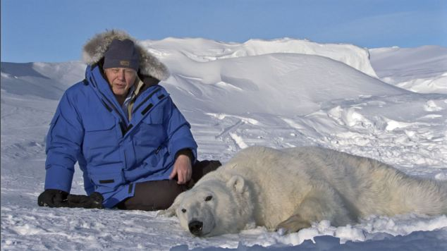 On thin ice: Sir David Attenborough with an anaesthetised polar bear, Svalbard during episode seven of the hit show Frozen Planet