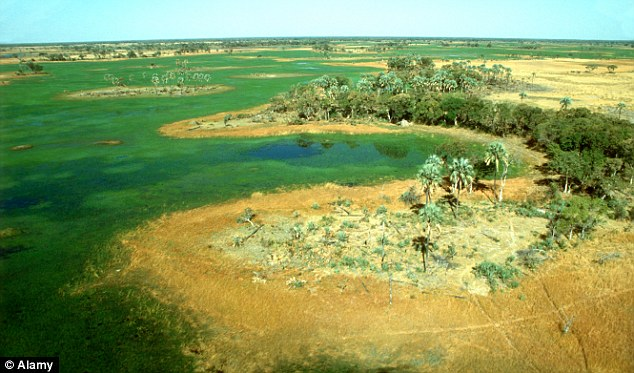 Aerial view of the Okavango Delta