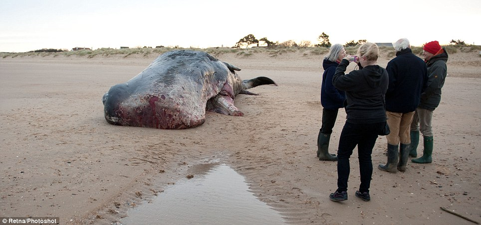 A number of people have descended on the beach to take pictures of the stranded whale