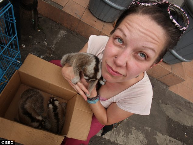 Heart-breaking: Nekaris with a box full of slow lorises - when she was searching for the animal in the wide they only saw six of them in a whole year