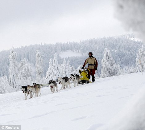 A musher rides his dog sled during a stage of the Sedivackuv Long dog sled race