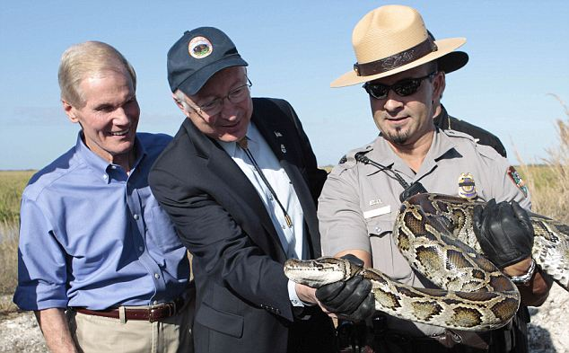 The National Academy of Science report released on Monday shows a sharp decrease in mammal sightings. This photo earlier this month shows Sec. of Interior Ken Salazar, center, and Sen. Bill Nelson, D-Fl, left, looking at a 13-foot python from the park