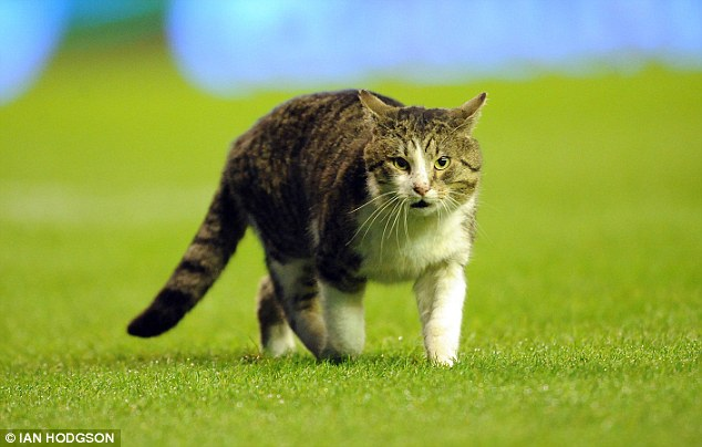 Four-legged friend: The cat held up play between Liverpool and Spurs for around a minute before makings its way off the pitch