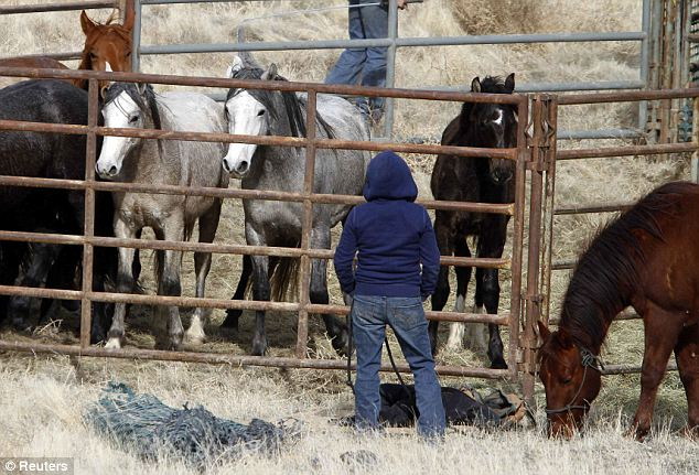 Purpose: The BLM was placed in charge of controlling the wild horses in 1971