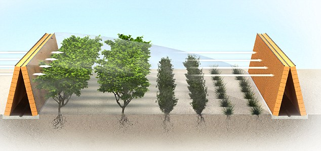 Smart: This graphic shows how evaporative hedges will provide humidity and shelter for plants growing there