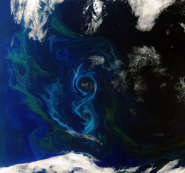 A phytoplankton bloom in the South Atlantic Ocean east of the Falkland Islands