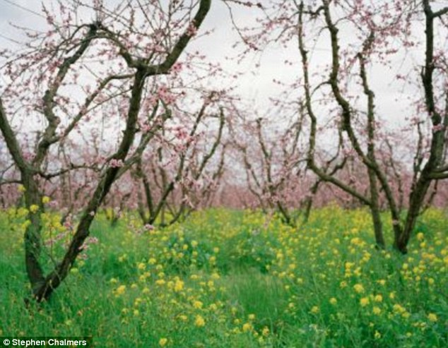Serene: A victim with the initials 'JC' was found in this orchard. Chalmers names each image after the victim