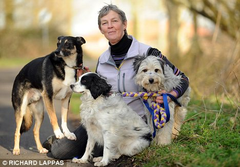 Nightmare: Gail Skinner, who had Halifax cover for Stitch, left, Phee and Kis, says she would struggle to pay vets' bills if the dogs became ill