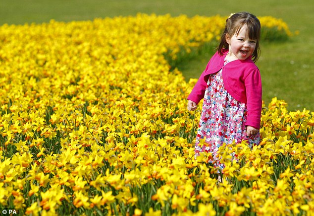 Two year-old Cecily Dargan plays in the daffodils as the fine weekend weather continues at Lee-on-the-Solent in Hampshire