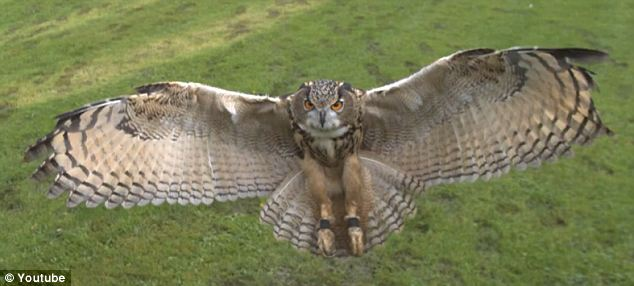 Full view: On average, their wingspan spreads from five to six feet wide