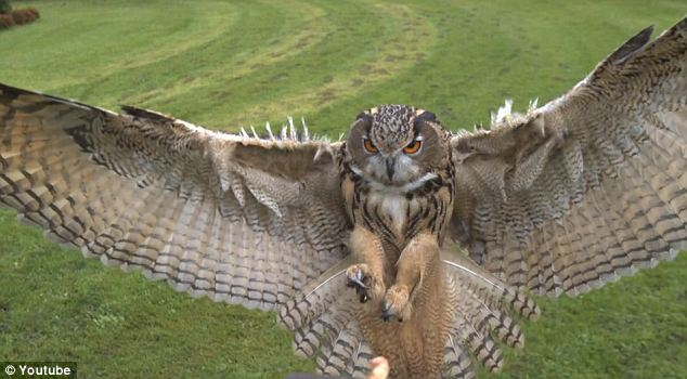 Details: The camera slows down to capture 1,000 frames per second and shows individual feathers on the bird's massive wings.