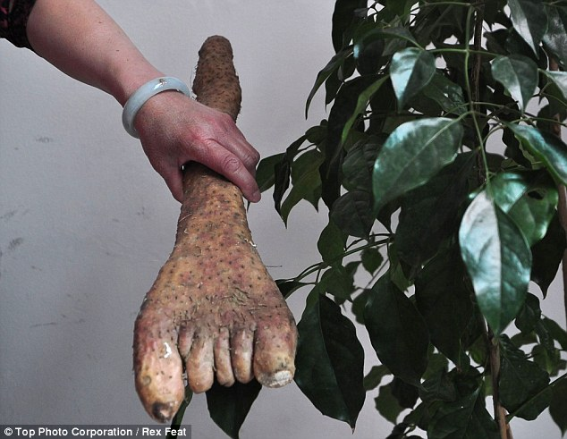 This little piggy: The tuber has developed a series of short growths that look just like human toes