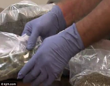 Seeing green: Around six pounds of marijuana was seized from her home