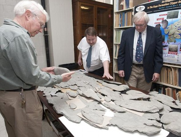 Experts are baffled as to whether the 6ft creature is animal, vegetable or mineraThe men in the photo are Ray Fine (middle) geologist Dave Meyer (left) and Carl Brett (Right)