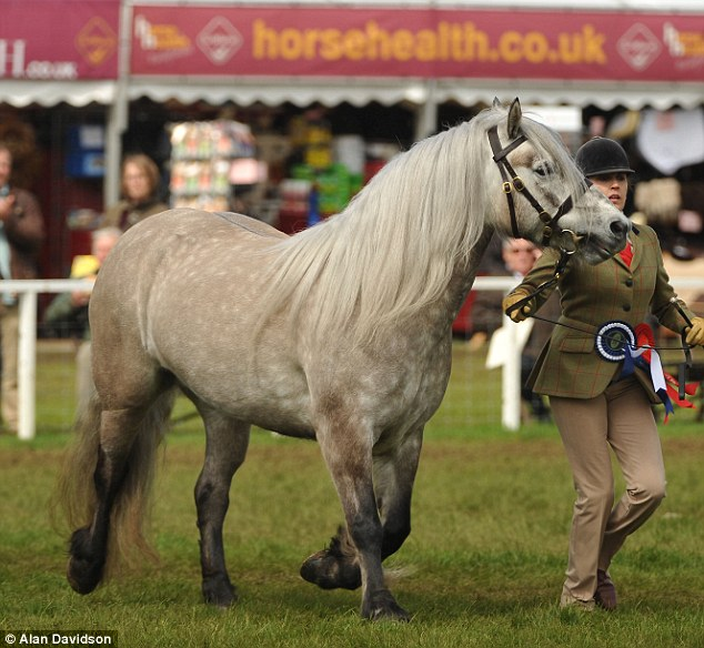Balmoral Erica made the Queen proud today as she took first place in the Highland Championship in the Copper Ring
