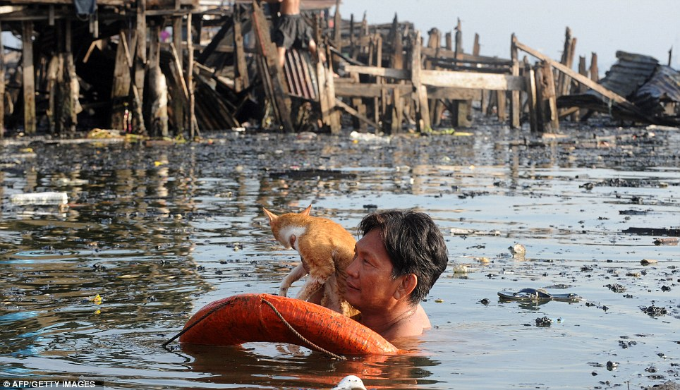 Soggy moggy: A resident rescues his cat from the water after the blaze razed the shanty town to the ground