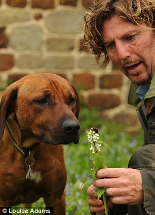 Getting to know you: The dog remembers the smell of the bee so that he can hunt them out in the future for protection