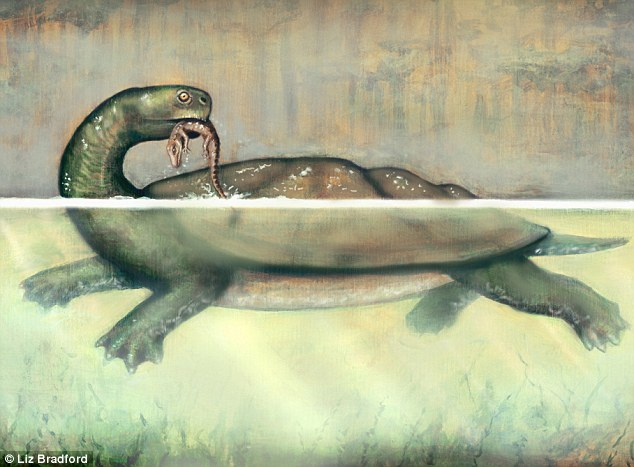 Taking a bite out of a croc: The 'coal turtle' would have a large territory based around a lake - and he could tackle small crocodiles with ease