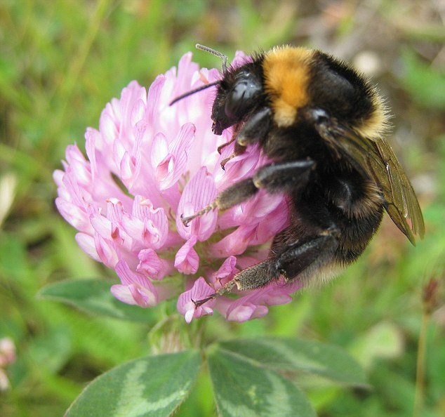 Decline: Healthy honeybee populations are essential for agriculture and pollinations