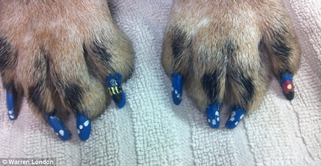 A simple blue and silver design on three-nailswith one statement talon on each paw
