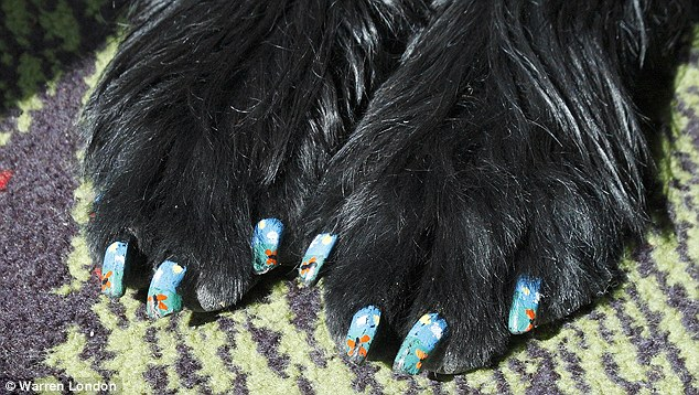 An intricate floral design is the perfect contrast for that glossy black fur