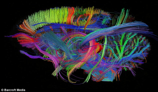 The 3D maps will allow us to see 'inside' the workings of the brain for the first time, claim the scientists