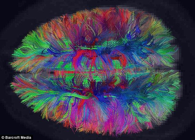 A map of the human brain showing the connecting nerve cells in our minds by Van Wedeen