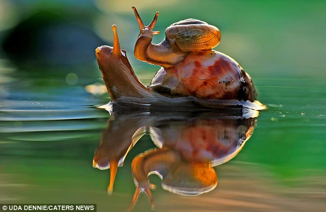 Animal magic: This lazy creature climbed on top of its mother's shell. knowing it would stay above the water and soak up some extra sun