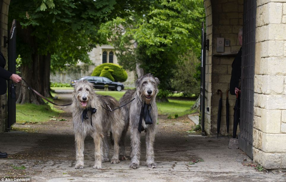 Not left out: Gibb's beloved Irish Wolfhounds Ollie and Missy also took part in the procession