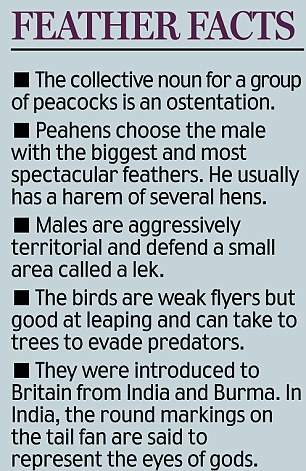 Feather facts