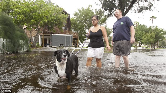 Waterdogged: Residents of the Riviera Bay community of St. Petersburg, Florida, experienced flooding after tropical storm Debby stalled over the Gulf of Mexico and dumped over 10 inches of rain