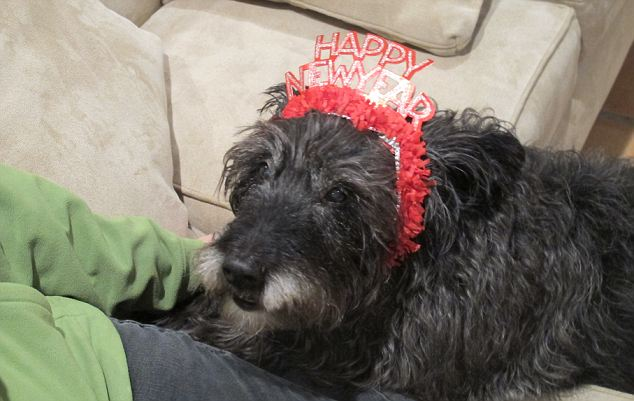 Older and wiser: Finn on New Year's Day in 2011