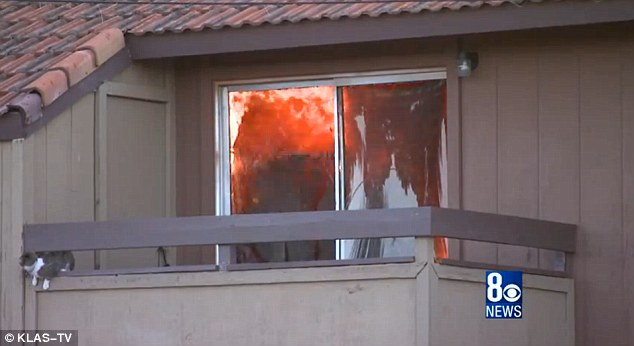 Inferno: This grey and white cat was trapped on a second-storey balcony at a Las Vegas apartment complex