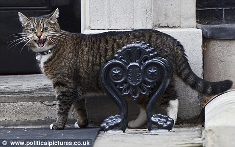 New predator: Mr Cameron has brought in Chancellor George Osborne's tabby Freya (above) as chief mouser at Number 10 in Larry's place