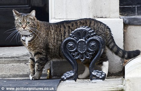 Turf war: When Freya was returned to George Osborne, there would no doubt have been some concerns as to how she would get on with Larry, the Prime Minister's cat