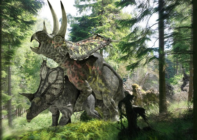 Pentaceratops dinosaurs mating: A surprising amount of research has been devoted to the subject - and most researchers have concluded that dinosaurs made love like dogs