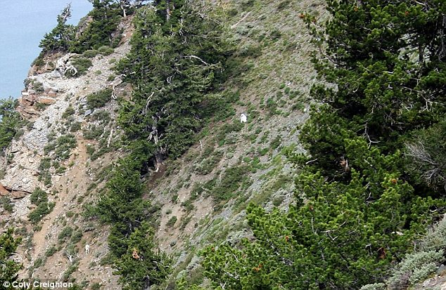 Goatman: The figure in the goat suit can be seen on the mountainside near Ben Lomond Peak as he or she slowly descends to join mountain goats situated below