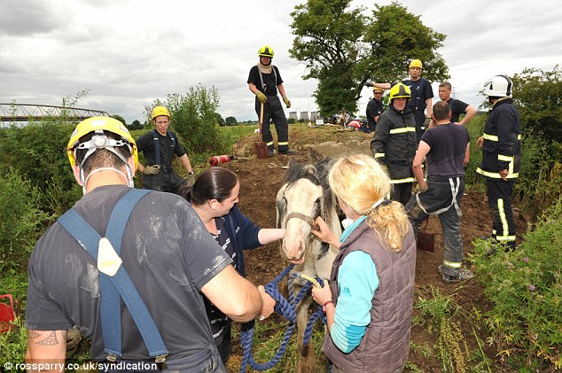 Rescued: It took eleven fire fighters several hours to dig two metres down into the chamber to release the horse