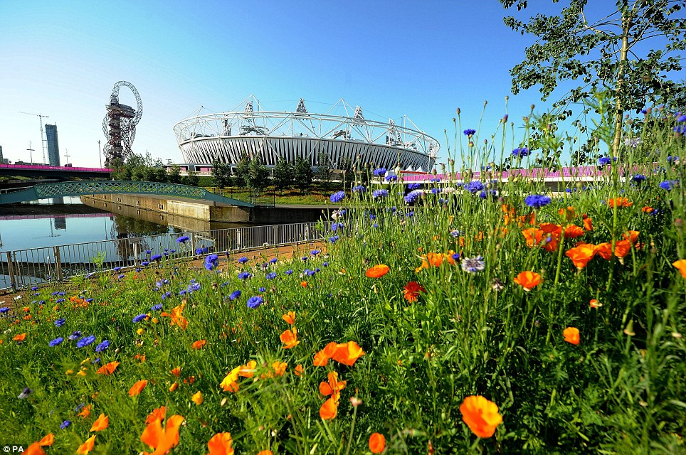 In bloom: The warm weather has caused a sudden growth spurt of wildflowers around the Olympic Stadium in east London